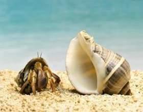 Crabes indigènes floride фото