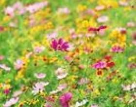 Mouvements créatifs avec plantes et fleurs pour le préscolaire фото