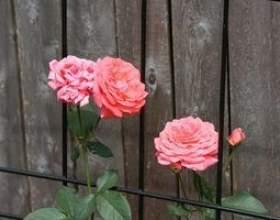 Idées de clôture pour une arrière-cour фото