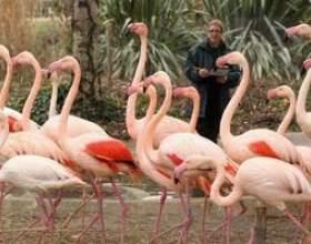Collèges floride qui offrent la zoologie фото