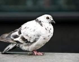 Jeux d`oiseaux fun фото