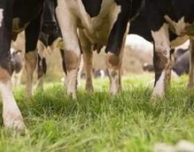 Subventions pour le forage d`un puits d`eau pour une ferme bovine фото