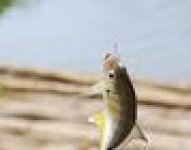 Comment puis-je utiliser une échelle de poissons berkley? фото