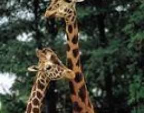 Combien de temps faut-il pour être un zoologiste? фото