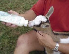 Comment demander à un vétérinaire une question en ligne gratuitement фото