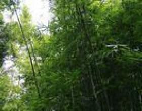 Comment attacher bambou clôtures фото