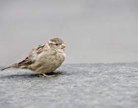 Comment nettoyer les fientes d`oiseaux hors de tissu фото