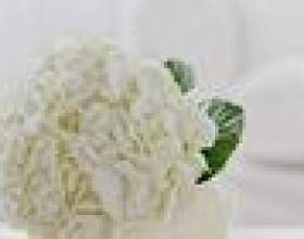Comment teindre hortensias фото