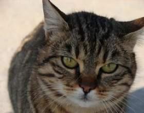 Comment nourrir le lait aux chats pour la constipation фото