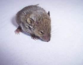 Comment trouver un trou où les souris viennent dans une maison фото