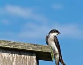 Comment se débarrasser des oiseaux dans mon abri фото