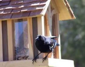 Comment garder les chats loin de mangeoires d`oiseaux фото