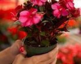Comment garder les oiseaux sur les pots de fleurs фото