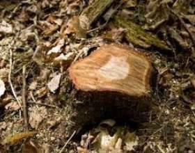 Comment tuer une souche d`arbre avec de l`huile фото