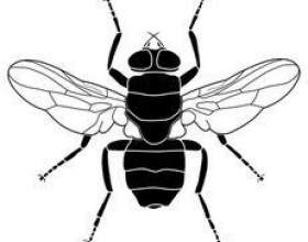 Comment tuer les mouches domestiques фото