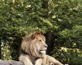 Comment faire un diorama de lion фото