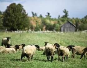 Comment faire une mangeoire pour les moutons фото