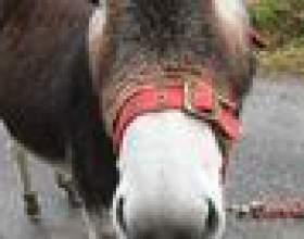 Comment faire des oreilles d`âne, les sabots et la queue фото
