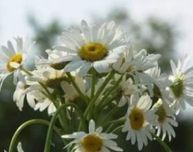 Comment faire des arrangements floraux pour un piédestal фото