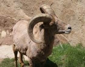 Comment utiliser le lait de chèvre pour améliorer le système immunitaire фото