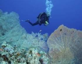 Écoles de biologie marine en floride фото
