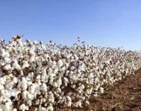 Le salaire moyen des producteurs de coton фото