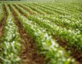 Types d`exonérations fiscales agricoles фото