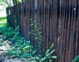 Types de clôtures pour les zones venteuses фото
