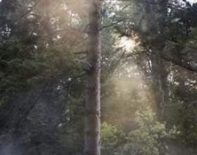 Techniques de calage des arbres фото