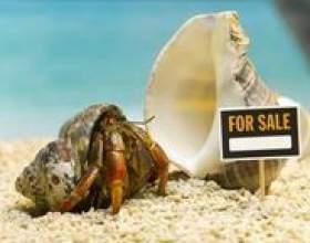 Qu`est-ce qui se passe quand un crabe ermite meurt? фото