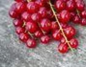 Qu`est-ce qu`un fruit cassis? фото