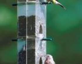 Les oiseaux ne mangent pas de mon alimentation фото